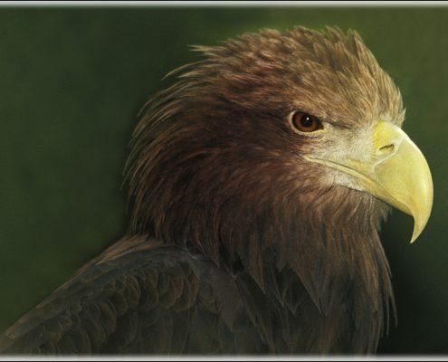 Adler-1